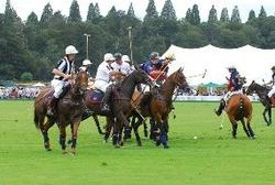 Polo Horse Deaths: Selenium Overdose Confirmed