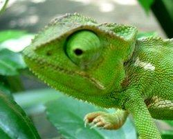 Rhode Island's New Reptile Laws Take Effect