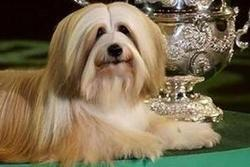 UK Charity Says Dog Shows Encourage Deformities