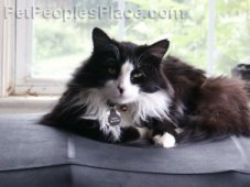 Cat Breed Profiles