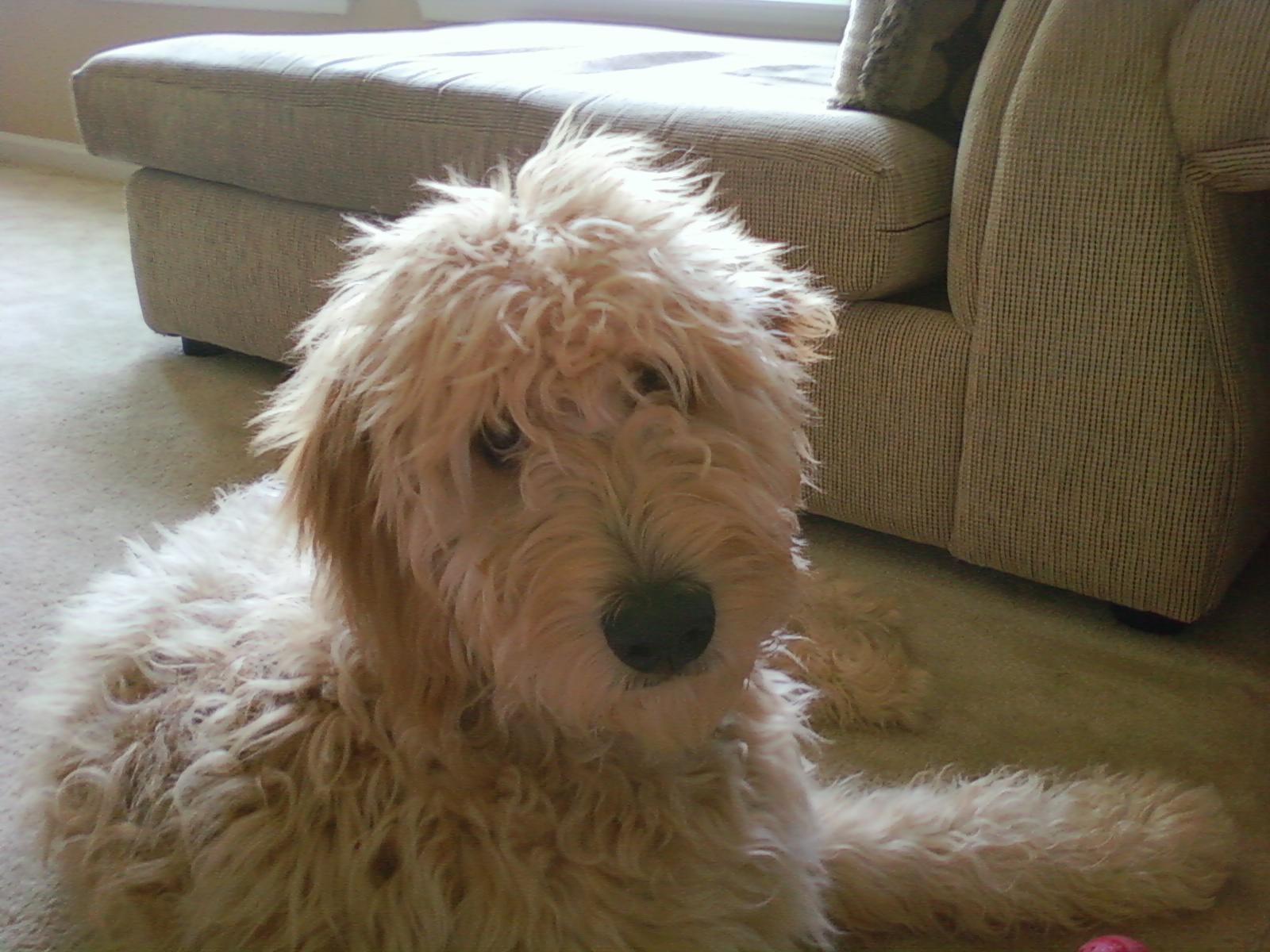 dogs breeds dog breeds book list of large dog breeds dog mixed breeds ...