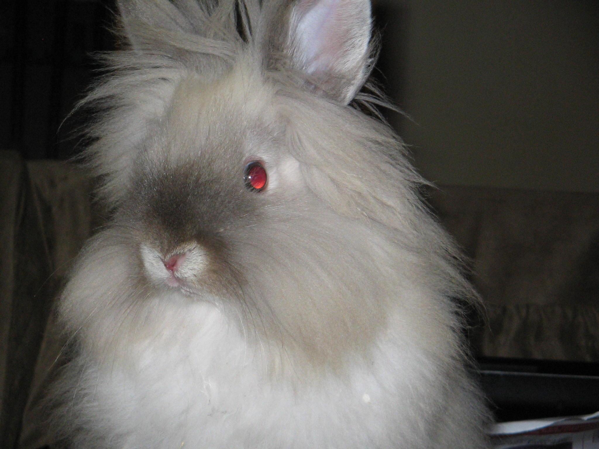 Rabbit dating service