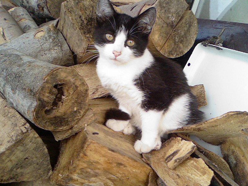 Cat litter from petsmart