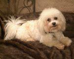 Cherie's Pet Sitting Service