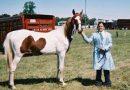 Evaluating a Horse's Vocabulary