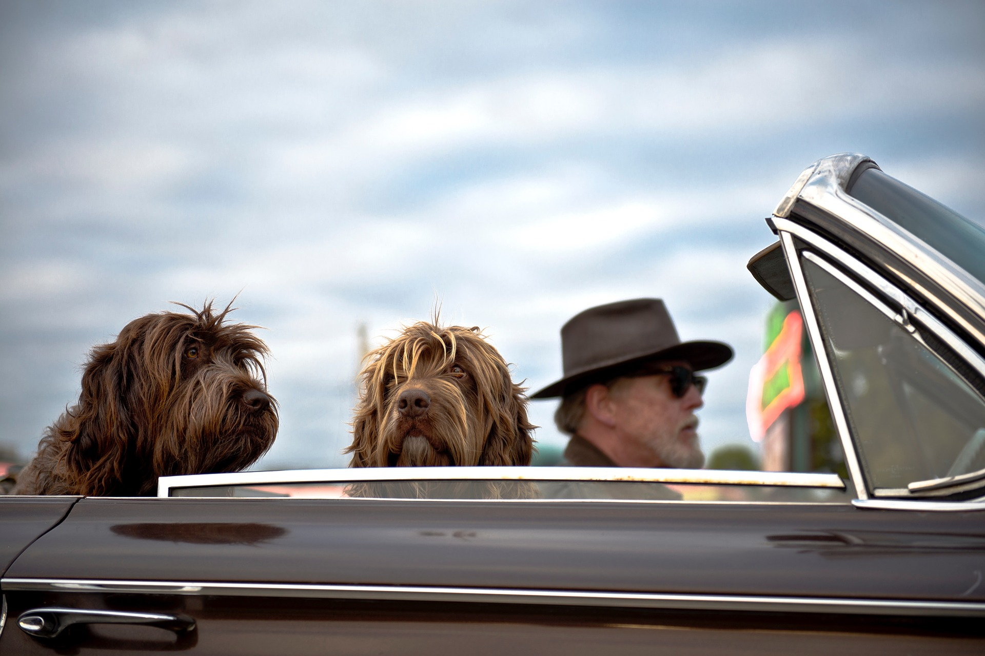 6 Tips for Stress-Free Traveling with Your Favorite Pooch