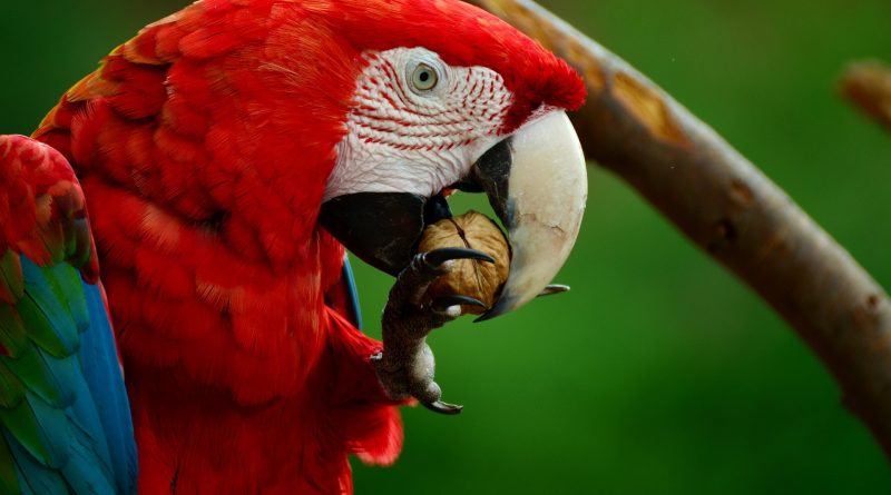 Healthy Snacks and Treats Your Parrot is Sure to Love