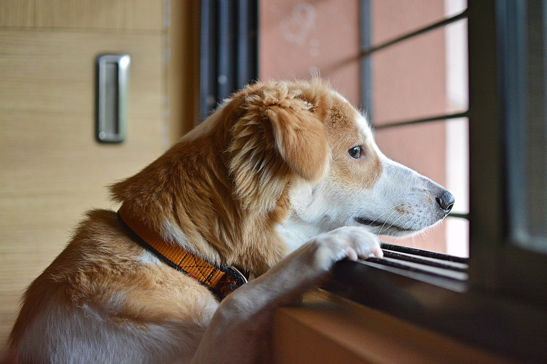 10 Tips to Help Your Dog Cope with Separation Anxiety