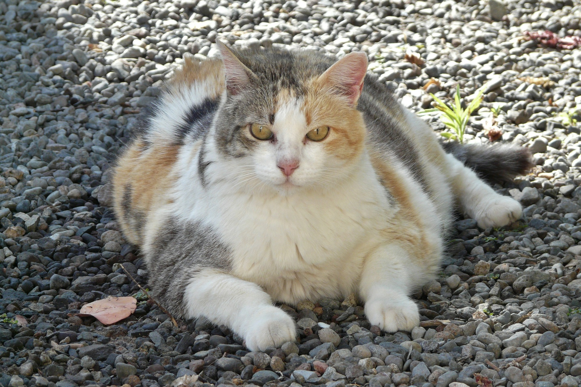 7 Tips to Help Your Cat Lose Weight