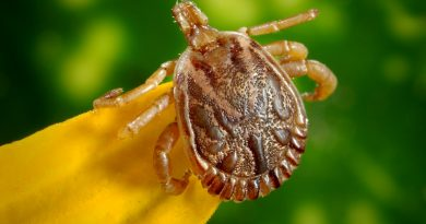 Ehrlichiosis: The Tick-Borne Disease You Haven't Heard About