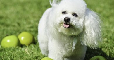 Is it Possible to Prevent Cancer in Dogs?