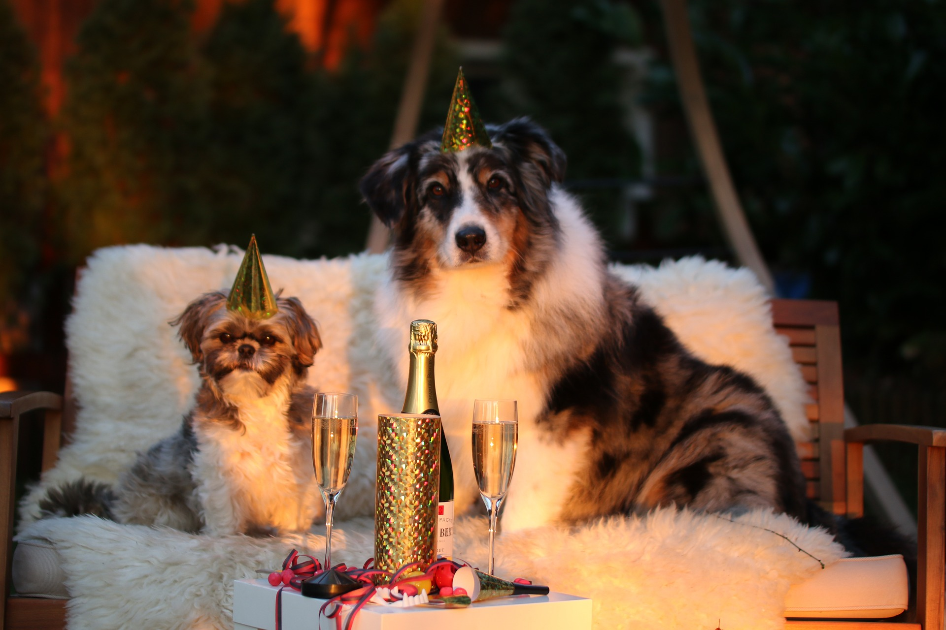 New Years Resolutions for Pet Owners