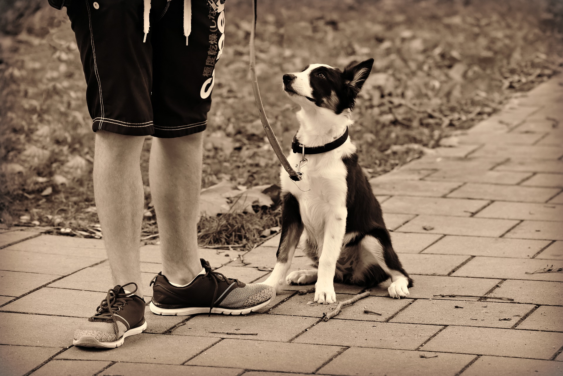 Four Basic Commands Every Dog Should Know