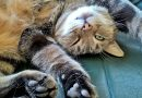 What is Your Cat Trying to Tell You? How to Decode Your Cat's Behavior