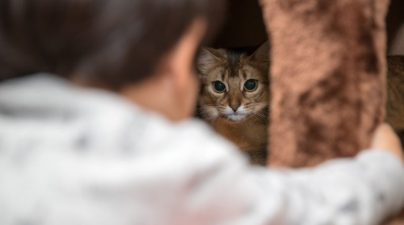 Cat Behavior Changes: Red Flags to Watch Out For