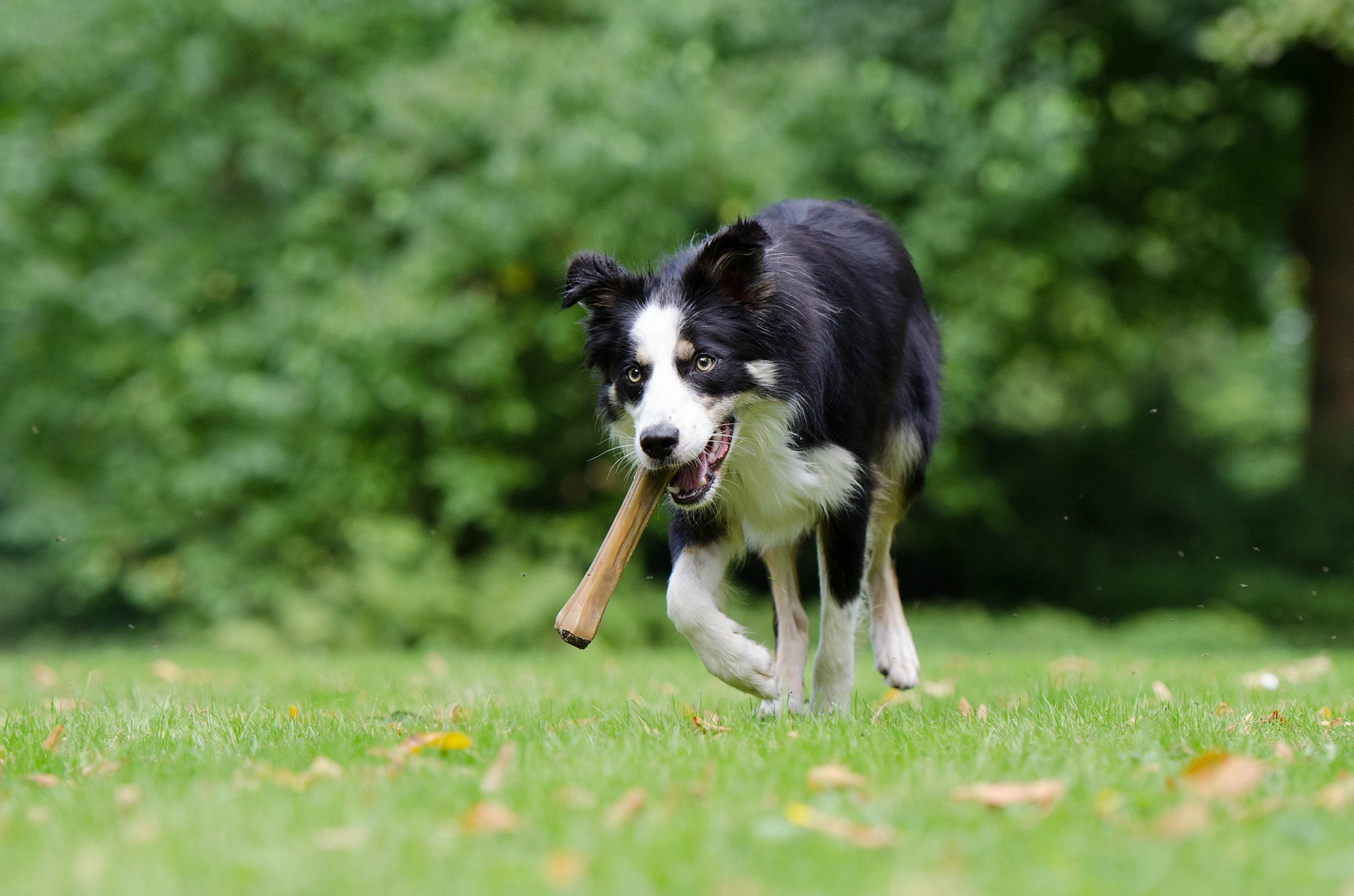 Chew on This, Not That: How to Choose the Safest Chew Toys for Your Dog