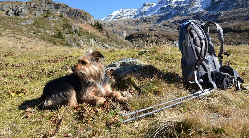 Four Reasons to Head Outside with Your Favorite Pooch