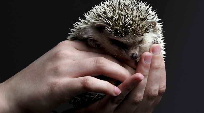Do Hedgehogs Make Good Pets? Here's What You Need to Know!