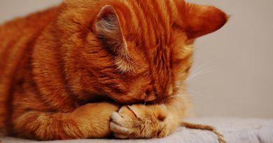 Feline Depression