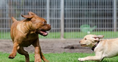 The Pros and Cons of Doggy Daycare