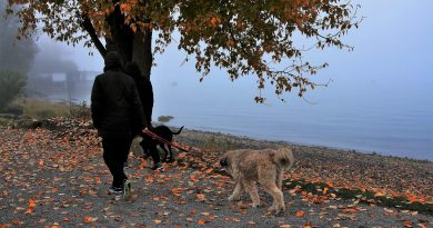 4 Ways to Make Your Dog Walks More Fun