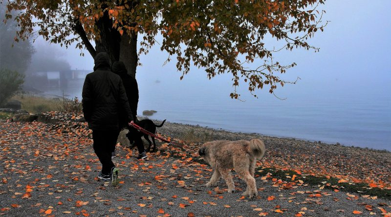 4 Ways to Make Your Dog Walks More Fun