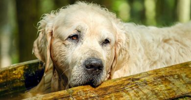 Canine Kennel Cough (What It Is and How to Help)