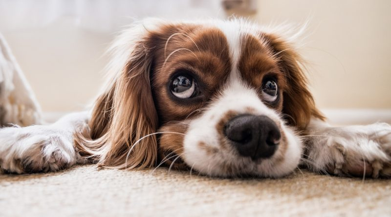 How to Help Your Dog Cope with Back to School Loneliness
