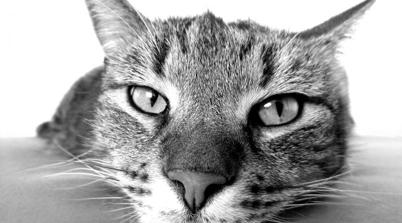 Common Health Problems for Senior Cats: What You Need to Know