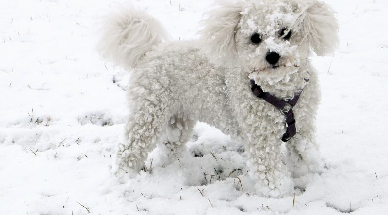 Creative Ways to Exercise Your Dog When It's Too Cold to Go Outside