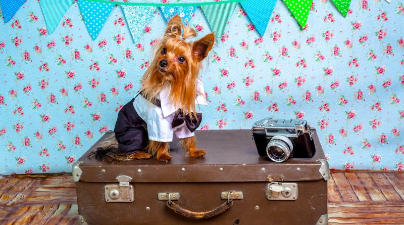 8 Tips for Flying with Your Dog