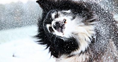 Winter Time Fun with Your Favorite Pooch
