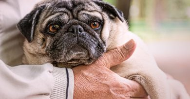 Best Pets for Seniors
