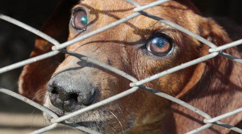 Pet Theft Prevention: 7 Tips to Keep Your Pet Safe