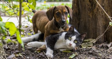 5 Fun and Creative Ways to Make Money with Your Dog (or Cat)