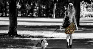 Are Daily Dog Walks Important?