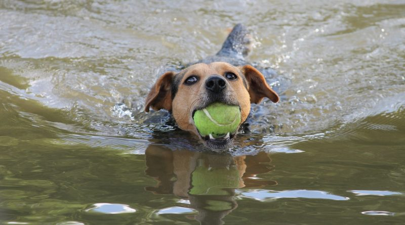 6 Springtime Activities Any Dog Will Love