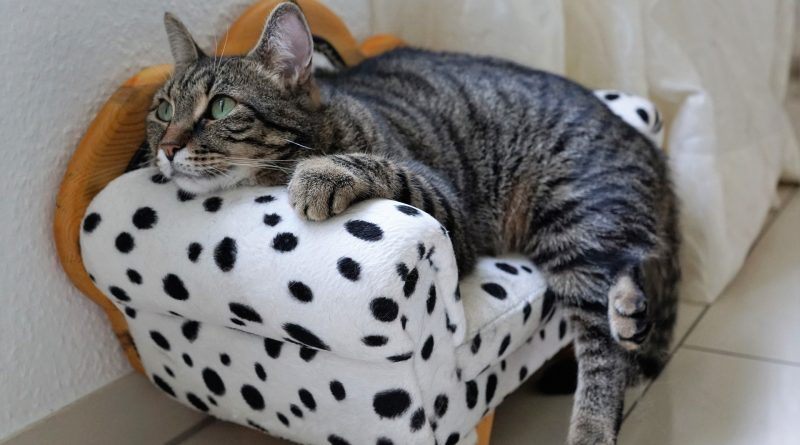 7 Tips for a Healthy, Happy Cat
