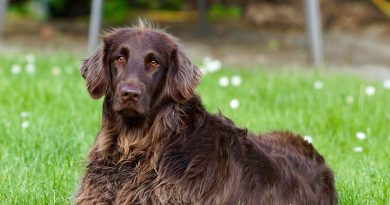 Lipomas on Dogs: Here's What You Need to Know