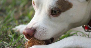 How to Break Your Puppy's Resource Guarding Habit