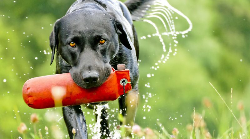 The Best Dog Breeds for Outdoor Enthusiasts