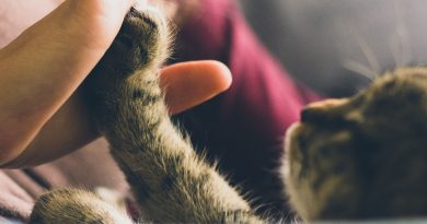 5 Fun Things to Do with Your Favorite Kitty