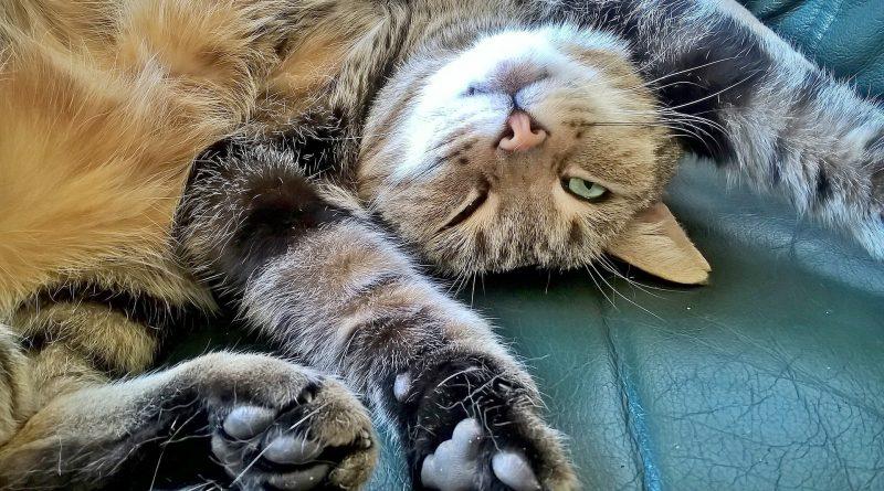 Your Cat's Body Language: Slow Blinking