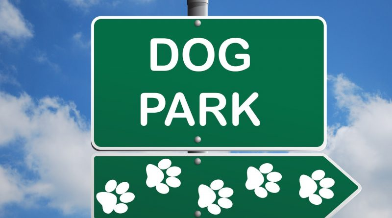 How to Keep Your Dog Safe at the Dog Park