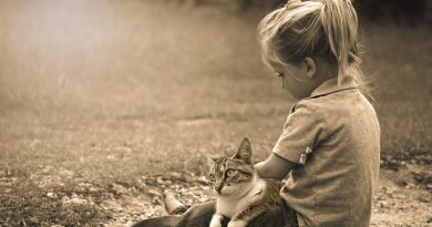 Cats and Kids: How to Encourage Safe Interactions